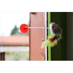 La souris tigeà ventouse